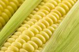 Landwirtschaft, Schüttgut und Biokraftstoff