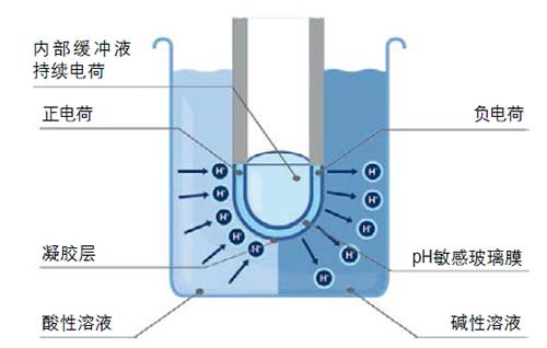 图1:在玻璃膜处产生电位
