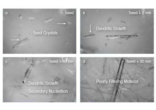 Crystal Size and Shape Dendritic Growth