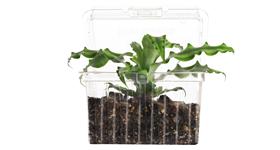 Plant a Tree with Rainin