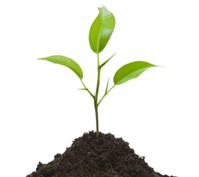 Plant a Tree With Rainin Service