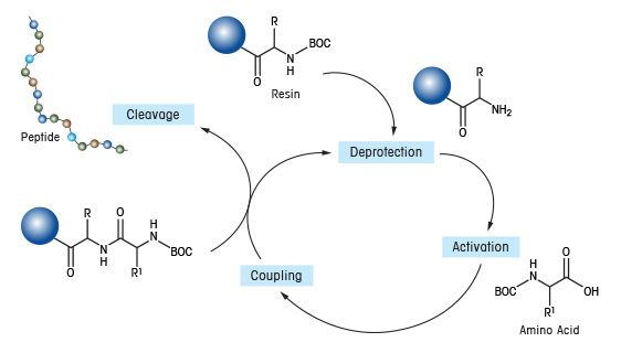 Solid Phase Parallel Synthesis