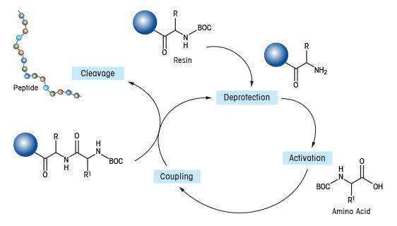 Parallelsynthese in der Festphase