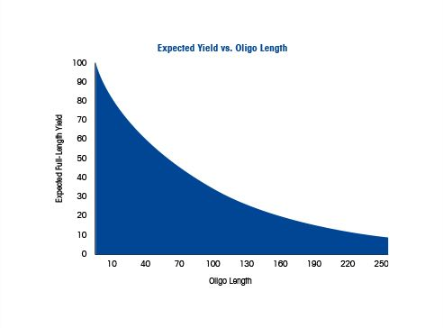 Oligonucleotide Length